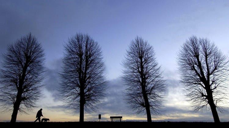 Einsames Wandern in Alleen ist auch diesen Herbst erlaubt. (Bild: Patrick Pleul/Keystone)