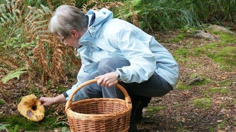 In Obwalden wird man wohl weiterhin an den ersten sieben Tagen eines Monats keine Pilze sammeln dürfen. (Archivbild: Romano Cuonz)