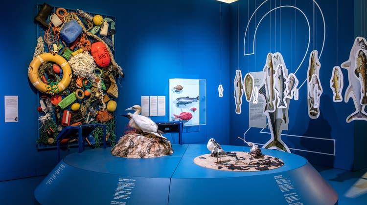 Ein Planet in Not im Naturhistorischen Museum in Basel