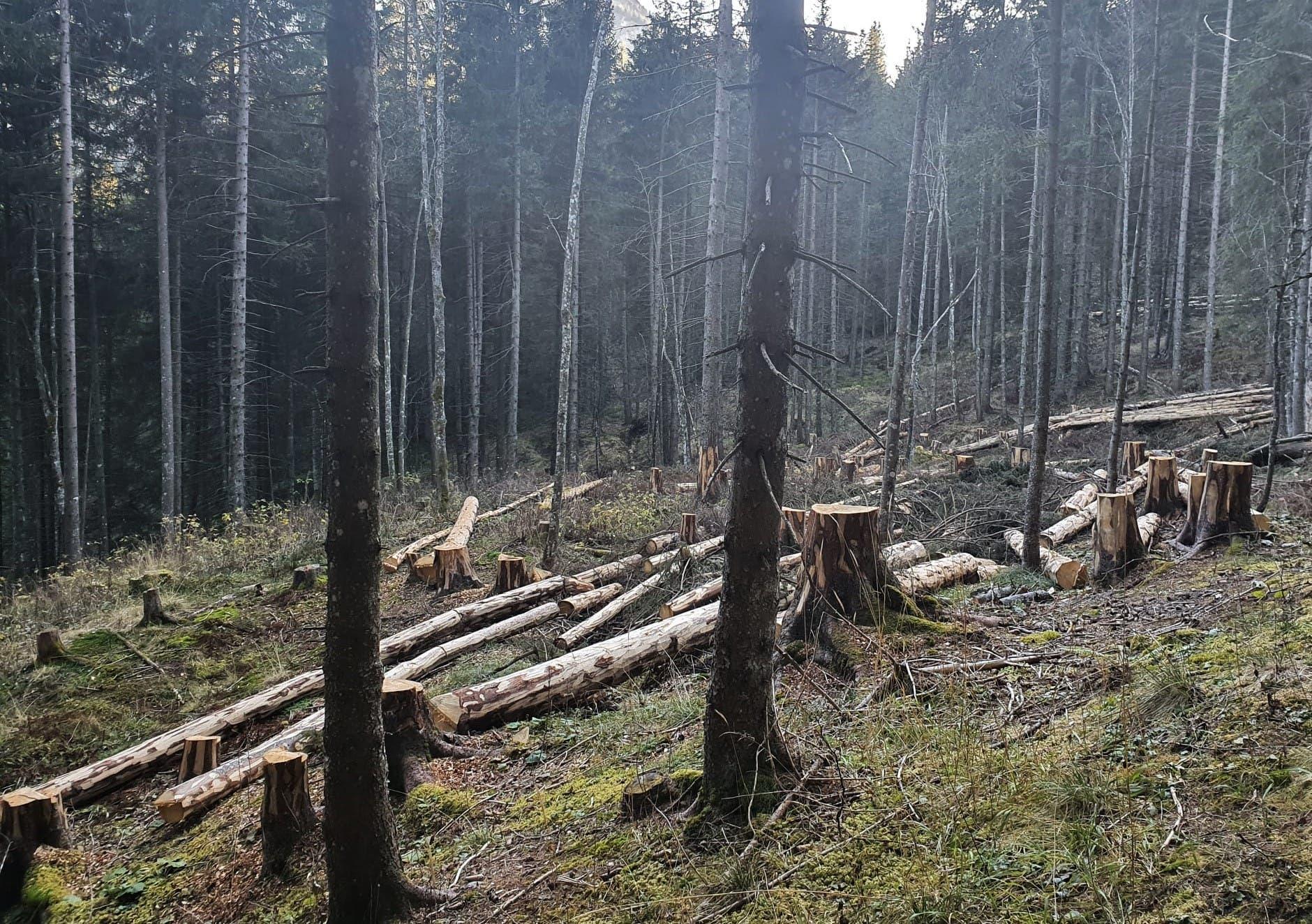 Das Holz in diesem Wald im Eigenthal bleibt liegen, weil der Markt dafür fehlt.