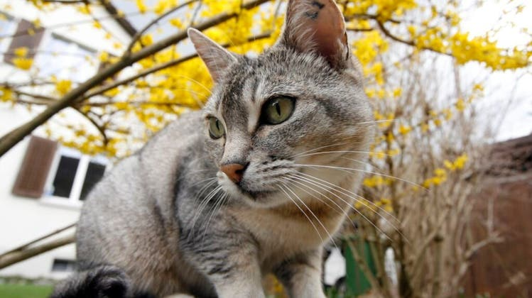 Weil Katzen Vögel fressen: Rentner lockte Nachbarskatze in Falle und schoss aus nächster Nähe auf sie