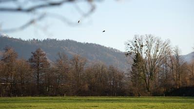 Für viele Zuger ist der Wald ein gern genutzter Naherholungsraum. (Bild: Maria Schmid (Zug, 10. Dezember 2019))