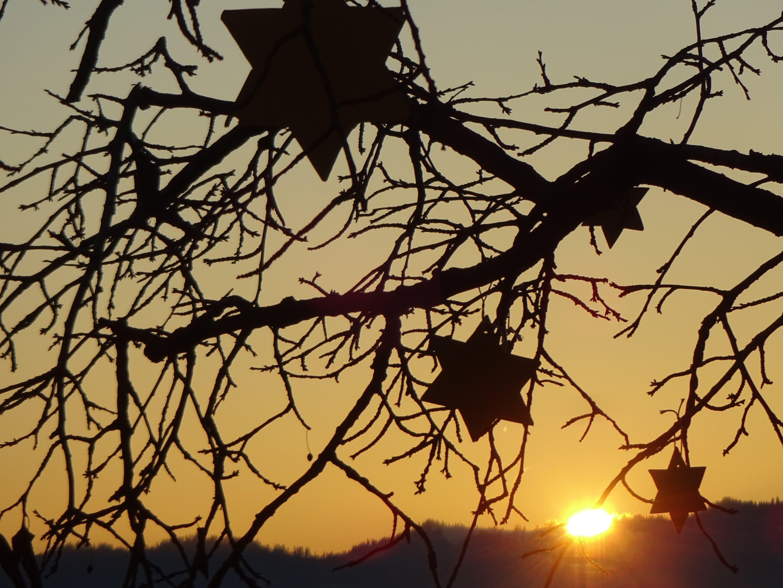 Tag 23: Die Weihnachtssterne, die an Kirschbäumen in Ruswil hängen, werden durch den Sonnenuntergang in Szene gesetzt werden.