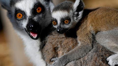 WWF: Viele Wildtierarten sind weiterhin bedroht