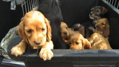 Illegale Tierimporte fordern die Ostschweizer Zollbehörden und Veterinärämter. (Bild: Imago Stock&people)