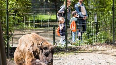Tierpark Lange Erlen steht vor grossem Jubiläum