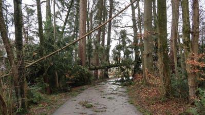 Die St.Galler Ortsbürgergemeinde rät, den Wald zu meiden. (Bild: St.Galler Ortsbürgergemeinde)