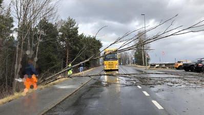 Auf der Ruggellerstrasse räumte die Feuerwehr Sennwald umgestürzte Bäume weg. (Bild: Feuerwehr Sennwald)