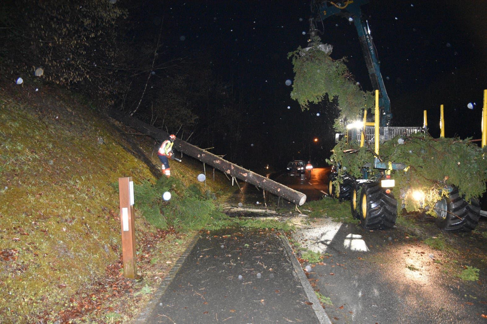 Als dieser Baum im Liechtenstein auf die Strasse fällt, verletzt er einen Motorradlenker.