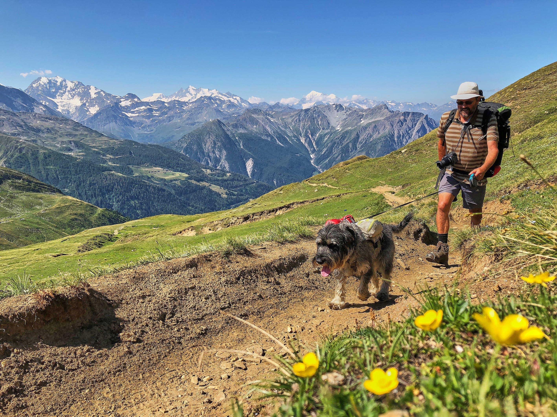 Peter Frommenwiler und seine Mittelschnauzer-Hündin Chia legten 2350 Kilometer zurück.