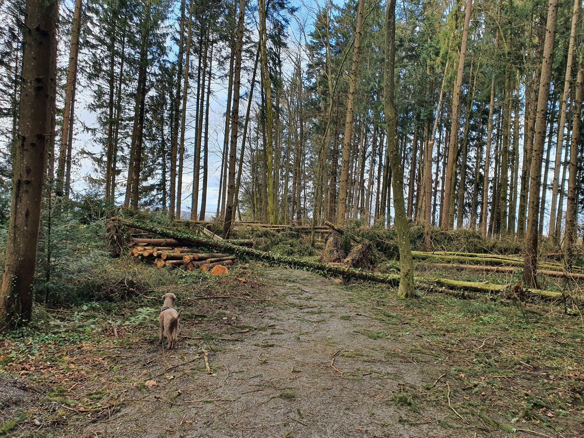 Der Waldweg ist durch umgestürzte Bäume blockiert. Da die umgestürzten Bäume unter Spannung stehen können, ist ihr Überklettern nicht ungefährlich.