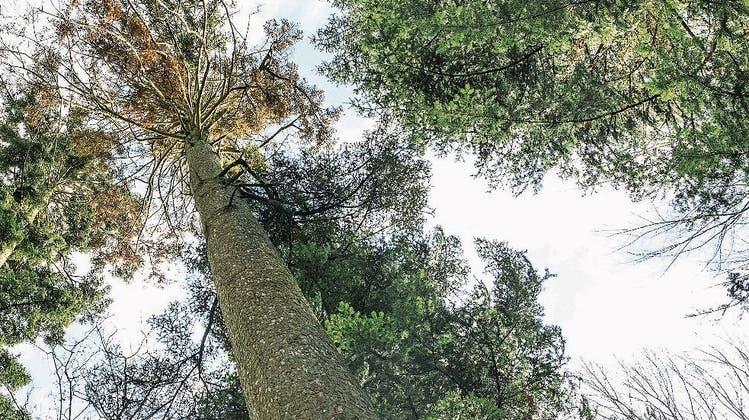 Bäume geben ihr Gedächtnis in den Samen weiter.