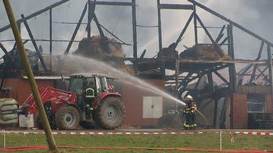 Scheune in Willisau komplett abgebrannt – für vier Kälber kam jede Rettung zu spät