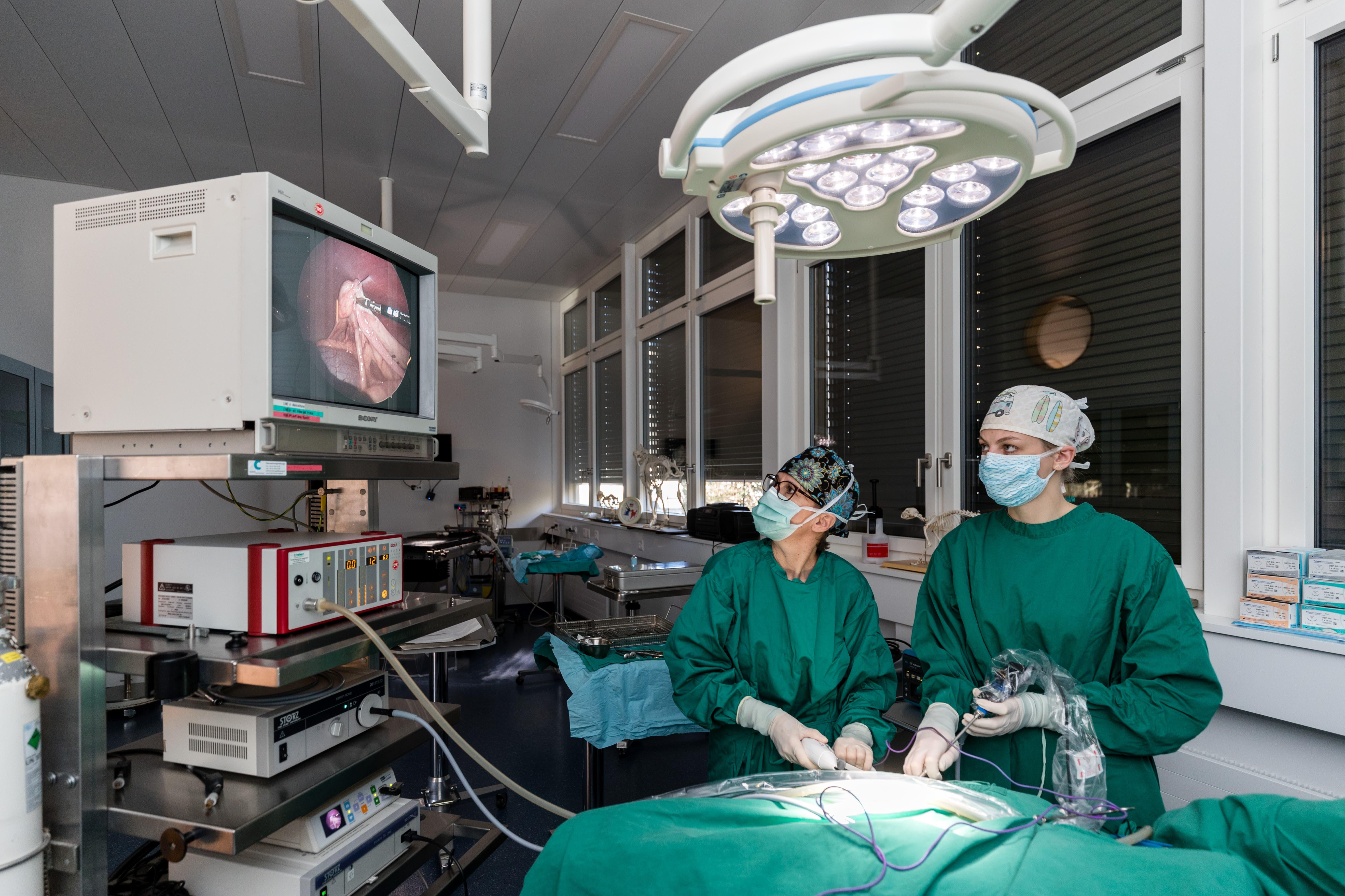 Tierärztin Muriel von Werthern (links) und Tierärztin Linda Wiedmer während der laparoskopischen Operation in der Kleintierchirurgie Sursee .