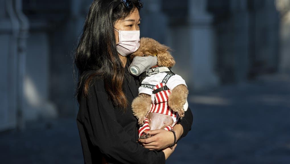 Immer mehr Leute versuchen ihre Haustiere mit Masken vor dem Corona-Virus zu schützen. Doch das bringt nichts, sagen Experten. (Keystone)