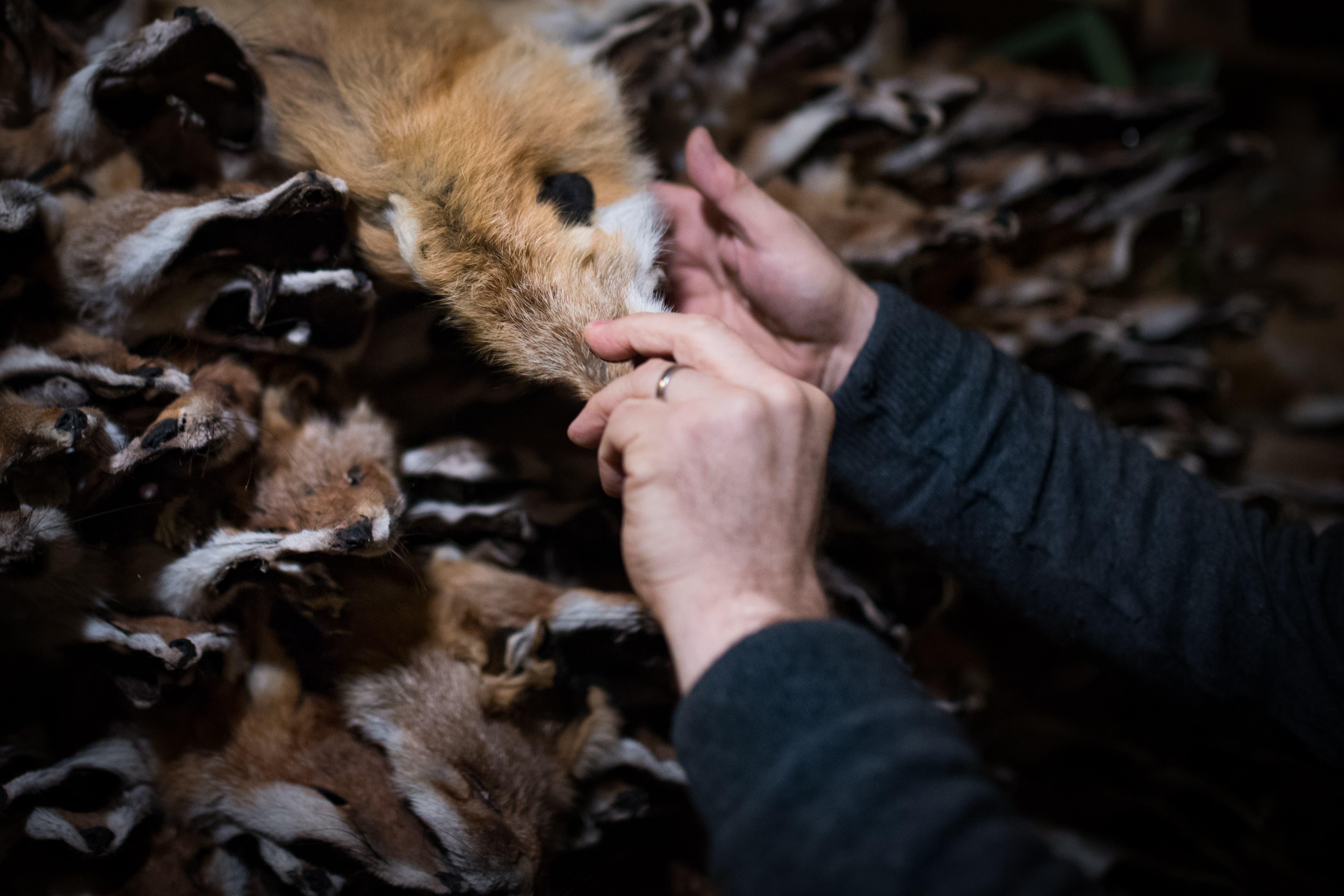 ... beliefern den Händler mit Fellen aus der heimischen Jagd. Die Füchse...