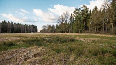 Der Boden in der Schachenwiti ist sehr feucht und damit ideal für stehende Gewässer. (Bild: Patrick Hürlimann (Hünenberg, 5. Februar 2020))