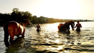 Ein Gruppe badet mit ihren Pferden und Ponys bei der Rossbadi. (Bild: Sarah Forster, 2018)