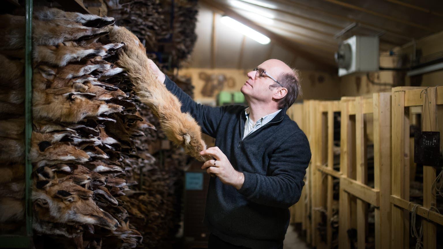 «Verrückt»: Dieser Pelzhandel ist für die Füchse – Ostschweizer Jäger entsorgen Pelze wegen zu tiefer Preise