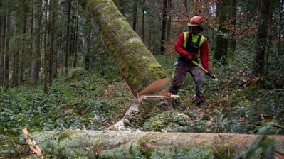 Ein Forstwart fällt einen Baum im Gütschwald. (Bild: Nadia Schärli, Luzern, 11. März 2020)