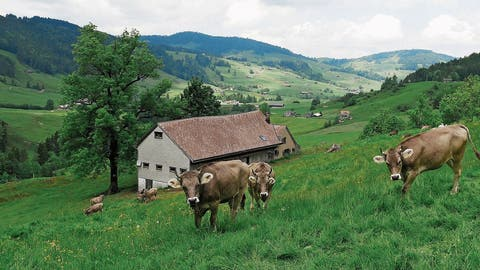 Alp-Quarantäne wegen Seuche in Muolen