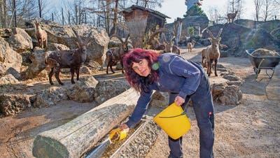 So funktioniert der Tierpark Goldau im «Minimalst-Betrieb»