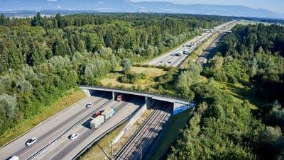 Wie hier in Kilchberg, soll auch über die A2 bei Neuenkirch eine Wildtierbrücke entstehen. (Bild: Emanuel Ammon/Pro Natura)