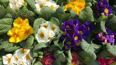 Eine bunte Blumenpracht kann für Lichtblicke sorgen. (Bild: PD)