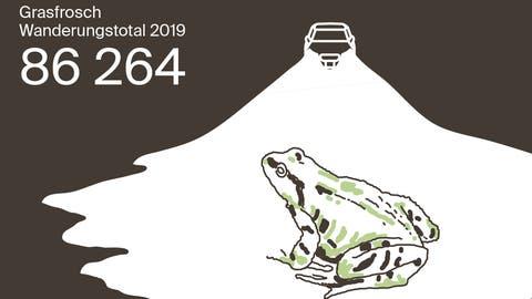 Auf dem Weg zum Liebesbad: Alles zur aktuellen Froschwanderung in 7 Grafiken