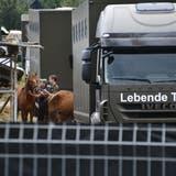 Seit dem Tierschutzfall Hefenhofen steht das Veterinäramt Thurgau in einem besonderen Fokus. (Bild: Manuel Nagel)