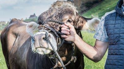 DussnangerTannzapfe-Cup ist abgesagt – ob es 2021 im Hinterthurgau zwei Schwingfeste gibt, ist noch unklar
