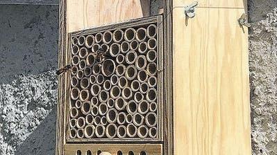 Da geht was: Die Wildbienen nisten im Basler Beehome. (Bild: Andreas Empl)
