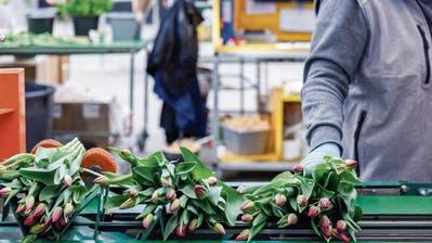 «Wir erwarten, dass sich die Leute stark mit Pflanzen eindecken werden»: Gartencenter wie Rutishauser aus Züberwangen rüsten sich für ihre Wiedereröffnung