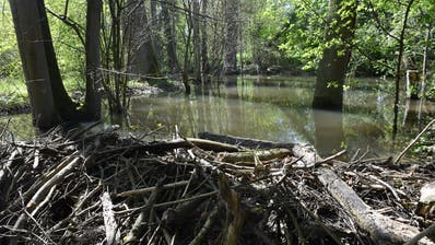 Hinter einem Damm staut sich der Imbersbach zu einem kleinen See auf. (Bild: Markus Schoch)