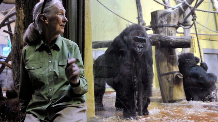 Primatenforscherin Jane Goodall wird Ehrendoktorin der Universität Zürich