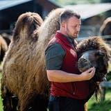 Der neue Kamelstall muss warten: Was die Tiere und Pfleger im Plättli-Zoo während des Lockdowns machen