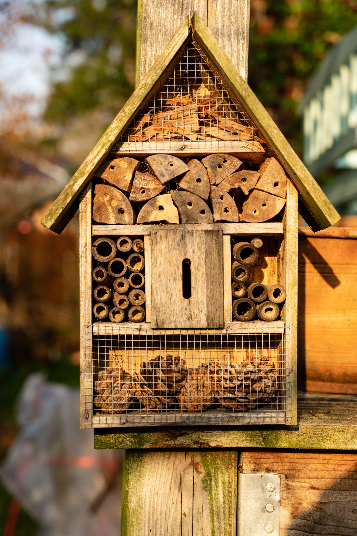 Insektenhotel In der Schweiz leben über 500 Insektenarten. Die meisten leben als Einzelgänger – so wie die Wildbiene. Diese sind keine verwilderten Honigbienen, sondern kleine wild lebende Bienen. Sie helfen massgeblich bei der Bestäubung von Pflanzen und Bäumen und spielen demnach eine unersetzliche Rolle in der Natur. Viele der Wildbienen sind gefährdet durch gedüngte Wiesen und zu aufgeräumten Gärten, wo sie zu wenig Nahrung finden. Mit einem Bienenhotel sowie einheimischen Blumen kann man helfen, den friedlichen Mitbewohnern im Garten ein Zuhause zu geben. Dieses sollte an einer sonnigen von Wind und Regen geschützten Stelle platziert werden.
