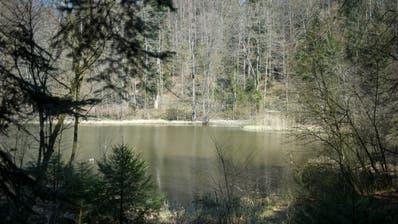 Einst ein Provisorium; heute möchten die Zuger den Steinhauser Waldweiher nicht mehr missen. (Bild: Maria Schmid 3. April 2020)