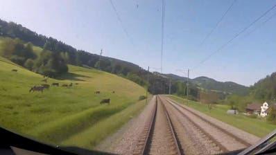 Gegen die Corona-Langeweile: Nehmen Sie Platz, fahren Sie mit – im Führerstand der Südostbahn