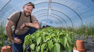 Bio wird für Luzerner Bauern zur echten Alternative – jetzt ist eine Offensive bei den Wirten geplant