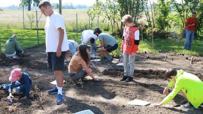 Die Schüler bepflanzen den Schulgarten. ((Bild: Christof Lampart))