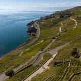 Weinbauern erhalten zehn Millionen Franken für Wein-Deklassierung