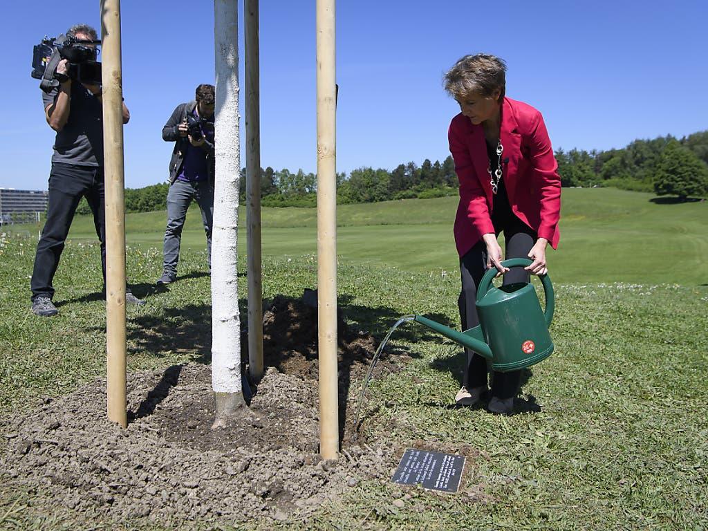 Baumgiessen und Medienaufsicht: Bundespräsidentin Simonetta Sommaruga wässert eine neu gepflanzte Sommerlinde auf der Berner Allmend.