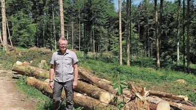 Borkenkäfer vernichten tonnenweise Holz