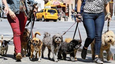 «Wir versuchen, zu überleben»: Rheintaler Tierpensionenleiden unter der Coronakrise