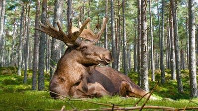 «Staycation»statt Trip ins Ausland: Ihm kanns egal sein. Doch die Schweden, die sind gar nicht happy. (Pixabay)