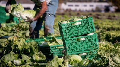Mit der Lockerung will der Bundesrat unter anderem Praktika in der Landwirtschaft wieder ermöglichen. (Symbolbild) (Keystone)