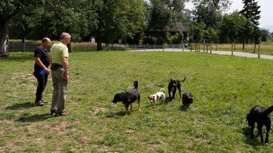 Die Wiese im Choller ist einer der wenigen Plätze nahe des Zugersees, an dem Hunde frei herumtoben dürfen. (Bild: Stefan Kaiser (4. Juni 2018))