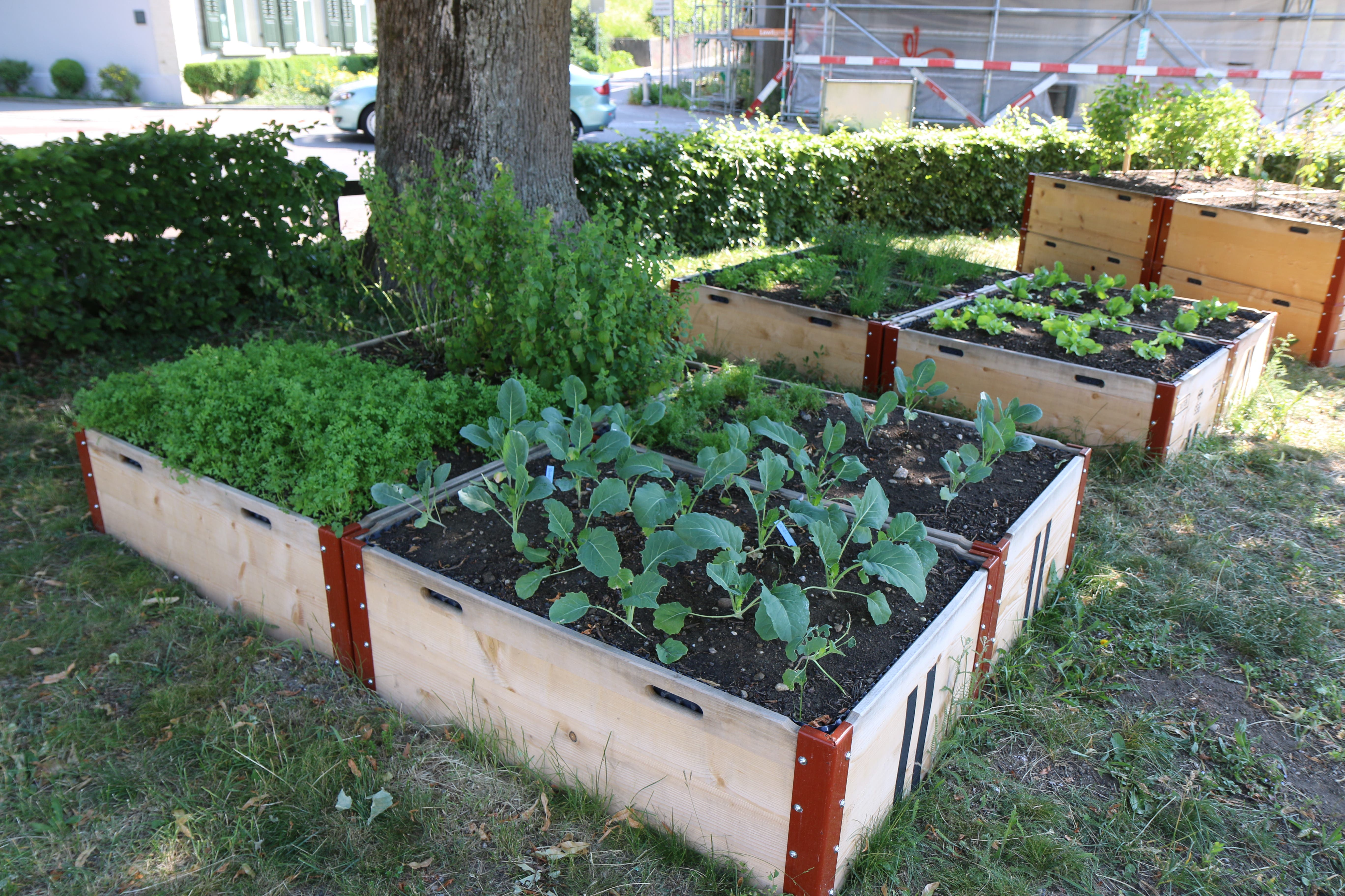 Die Hochbeete laden ein zum Pflanzen, Pflegen und Ernten.