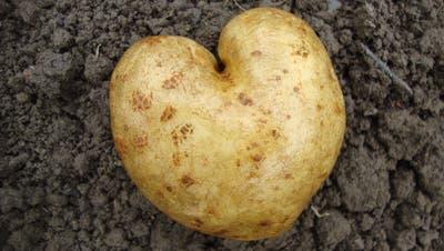 Härdöpfel in Herzform: Kartoffeln gelten nicht als Neophyten. ((Bild: PD))